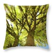 Twin Trees Throw Pillow