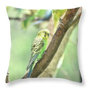 Two Adorable Budgie Parakeets Living In Nature Throw Pillow