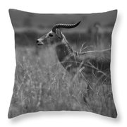 Uganda Cob Throw Pillow