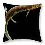 Valdina Farms Salamander Throw Pillow
