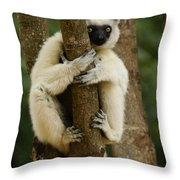Verreaux's Sifaka Throw Pillow