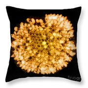 Wasp Nest, X-ray Throw Pillow