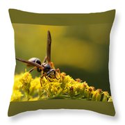 Wasp On Wildflower Throw Pillow