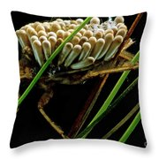 Water Beetle Brooding Eggs Throw Pillow