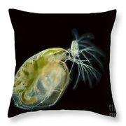 Water Fleas Simocephalus Sp., Lm Throw Pillow