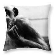 Welcome To The Zoo Throw Pillow