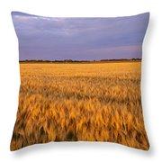 Wheat Crop In A Field, North Dakota, Usa Throw Pillow