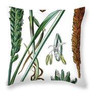 Wheat, Triticum Vulgare Throw Pillow