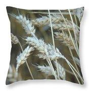 Wheats  Throw Pillow