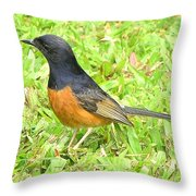 White-rumped Shama Throw Pillow