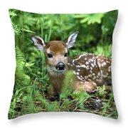 White-tailed Deer Odocoileus Throw Pillow