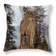 White-tailed Deer Three Throw Pillow