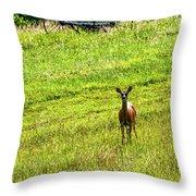 Whitetail Deer And Hay Rake Throw Pillow