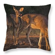 Whitetail Deer At Waterhole Texas Throw Pillow by Dave Welling