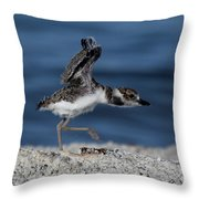 Wilson's Plover Throw Pillow