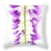 Wisteria Flowers, X-ray Throw Pillow