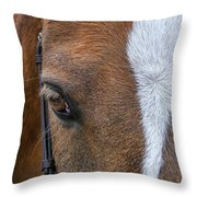 Wonder Pony Throw Pillow