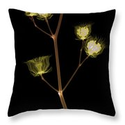 X-ray Of The Velvet Leaf Seed Pods Throw Pillow