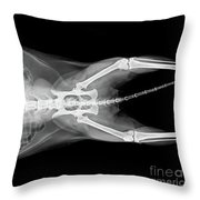 X Ray Plate Of Cat Throw Pillow