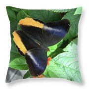 Yellow-edged Giant Owl Butterfly #6 Throw Pillow