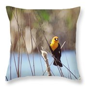 Yellow-headed Blackbird Throw Pillow