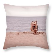 York Dog Playing On The Beach. Throw Pillow