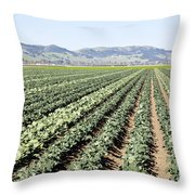 Young Broccoli Field For Seed Production Throw Pillow