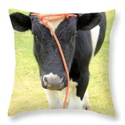 Young Bull In A Field Throw Pillow
