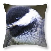young Chickadee  Throw Pillow
