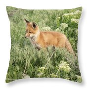 Young Red Tailed Fox Throw Pillow