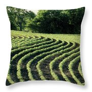 Young Soybean Plants Throw Pillow