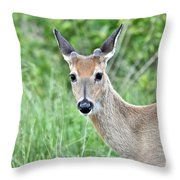 Young White-tailed Buck In Velvet Throw Pillow