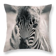 Zebra Colt In Spring Throw Pillow