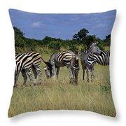 Zebra Group Throw Pillow