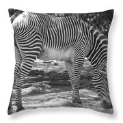 Zebra In Black And White Throw Pillow