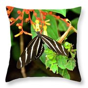 Zebra Longwing On Firebush  Throw Pillow