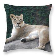 Zoo Lion Throw Pillow