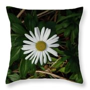 10-15-16--4996 Montauk Daisy Don't Drop The Crystal Ball Throw Pillow