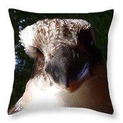 Australia - Kookaburra Up Close Throw Pillow