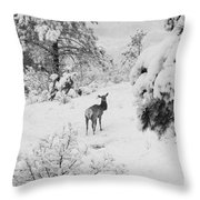 Elk In Deep Snow In The Pike National Forest Throw Pillow