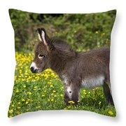 Miniature Donkey Foal Throw Pillow