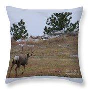 10 Point Buck Heads West Throw Pillow