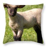 Spring Lamb Throw Pillow
