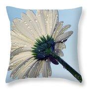 White Gazania Throw Pillow