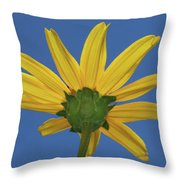 Wild Sunflower Stony Brook New York  Throw Pillow