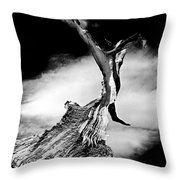 1000 Years To Create Throw Pillow