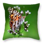 1074- Butterfly Throw Pillow