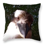 Australia - Kookaburra Looking Right At You Throw Pillow