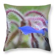 Closeup Of A Colourful Flower Throw Pillow