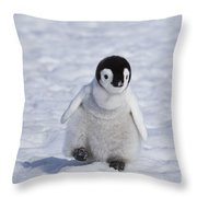 Emperor Penguin Chick Throw Pillow